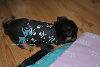 Welpe Hunde Softgeschirr Skull Pirat Schädel Schwarz Weiß Chihuahua