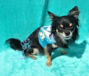Hunde Softgeschirr Smoking Hochzeitsanzug für Hunde Geschirr Chihuahua blau weiß Strass