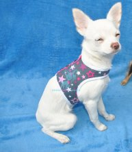 Hunde Softgeschirr Grau Sterne Pink Weiß Strass Chihuahua