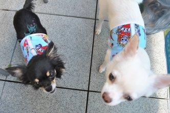 Hunde Softgeschirr Tattoo Art hellblau Mom Chihuahua